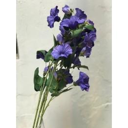 Campanilla Violeta