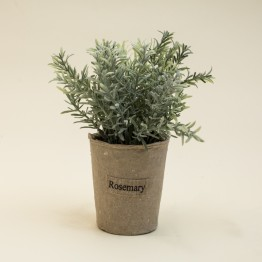Maceta Rosemary